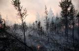 Лесной кодекс 2.0. Новую концепцию документа рассмотрят в Общественной палате