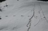 Индийские военные опубликовали в Twitter фото якобы следа снежного человека