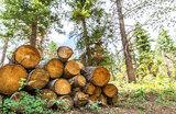 Кто вырубает подмосковные леса?