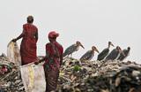 Как в разных странах борются с мусором