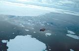 В Антарктиде откололся айсберг размером с Петербург