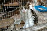 В Тульской области «кот-наркокурьер» сбежал от следственного эксперимента