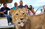«Причины маразматические и смехотворные». Крымский сафари-парк «Тайган» оказался под угрозой закрытия