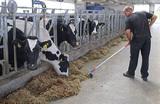 «Усилить меры по борьбе с чем-нибудь». Как регулируют аграриев в России и Белоруссии?