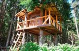 Домики на деревьях. Как предприниматель из Санкт-Петербурга зарабатывает на необычном строительстве