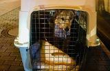 Жительница Перми рассказала, что «Аэрофлот» забыл ее пса среди багажа при пересадке