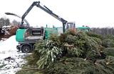 Елки незеленые. В Москве продолжается сбор новогодних деревьев для переработки