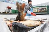 Как Белоруссия зарабатывает на российской рыбе?