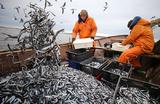 В ФАС объяснили, зачем надо ввести аукционы на вылов рыбы