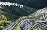 Террасное земледелие в провинции Гуйчжоу на юго-западе Китая.