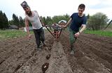 Осадки в средней полосе России грозят нанести ущерб сельскому хозяйству