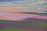 Цветочные поля возле города Кастеллуччо-ди-Норча в итальянском регионе Умбрия.