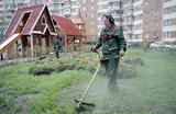 «Практически косят землю». Москвичи жалуются на покосы травы