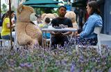 Плюшевых медведей специально усадили за столиками кафе в Мехико, чтобы гости соблюдали социальную дистанцию.