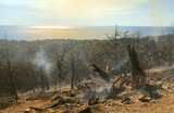 «В таком виде, как было, восстановить не получится». В районе Анапы выгорела самая ценная часть заповедника «Утриш»