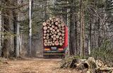 «Это большой бизнес, большие деньги». Путин предложил изменения по вопросам лесного комплекса