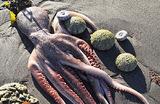 Почему на Камчатке массово гибнут морские животные и что случилось с океанской водой?