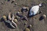 «Как можно быстрее определить источник загрязнения». Что отравило океан на Камчатке?