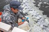 В РАН назвали токсичные водоросли одной из основных версий загрязнения на Камчатке