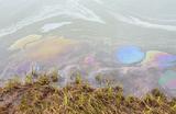Росрыболовство: ущерб рыбной отрасли из-за аварии на ТЭЦ в Норильске превышает 3,5 млрд рублей