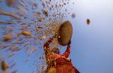 Сбор урожая риса в Непале.