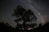 Туранга на фоне Млечного Пути. Алматинская область, Казахстан.