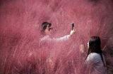 Фотосессия в одном из природных парков Южной Кореи, где продолжается сезон цветения пушистой розовой травы — мюленбергии (pink muhly grass).