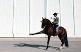 Лошадь чистокровной испанской породы на Международной конной ярмарке в Севилье.