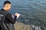 Правоохранители начали проверку по факту массового мора рыбы в Аршань-Зельменском водохранилище