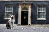Главный Мышелов Резиденции ПравительстваВеликобритании (Chief Mouser to the Cabinet Office) кот Ларри зевает возле дома номер 10 на Даунинг-стрит в Лондоне.