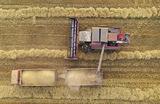 Почему на российском рынке резко подорожала пшеница?
