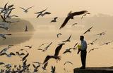 Туманным утром на набережной реки Ямуна в Нью-Дели прохожий кормит чаек.