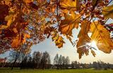 Осень в Московской области.