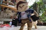 Кот в маскарадном костюме. Джакарта, Индонезия.