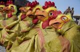 Акция зоозащитников против массовой ликвидации птиц на фермах из-за высокопатогенного птичьего гриппа прошла в Сеуле.