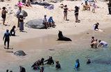 Отдыхающие на пляже в Ла-Хойя. Калифорния, США.