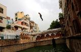 Прыжок в воду. Нью-Дели, Индия.
