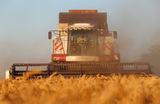 Уборка урожая пшеницы в Ростовской области.