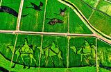 Гигантские картины на полях, созданные при помощи посадки риса различных сортов в китайской провинции Ганьсу.