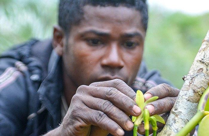 Как российский музыкант уехал выращивать ваниль на Мадаскар